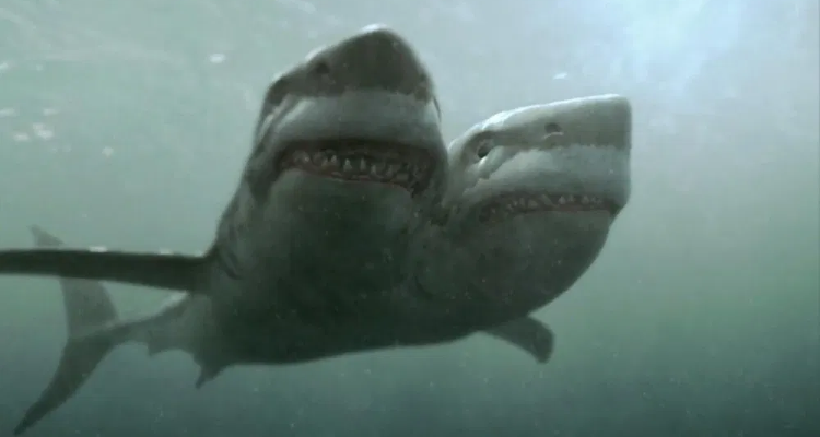 Still of shark horror, 2-Headed Shark Attack